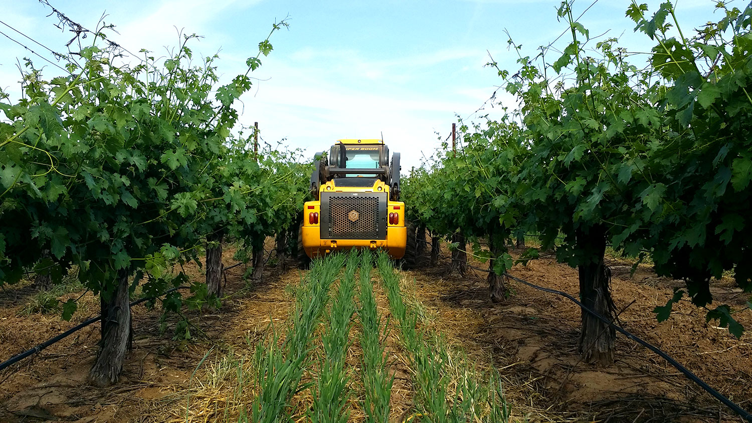 ASI's Forge completes robotic mowing tasks in a California vineyard